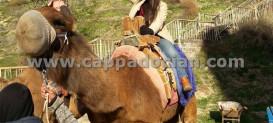 Camel Riding Cappadocia